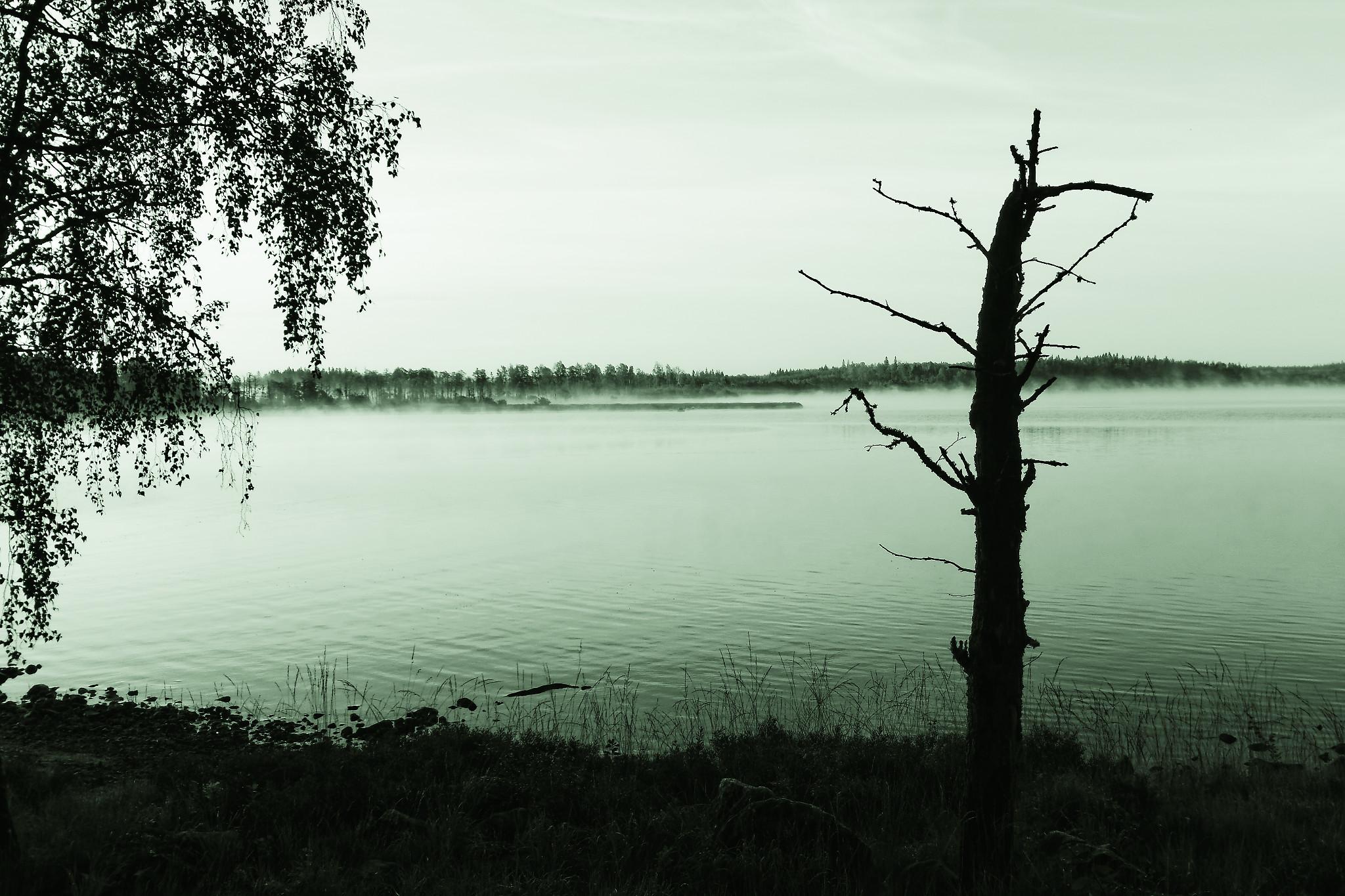 Kalvfestivalen 2020 – inställd!